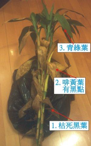 dead5plant